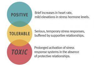 stress, toxic stress, baby, brain development, brain growth